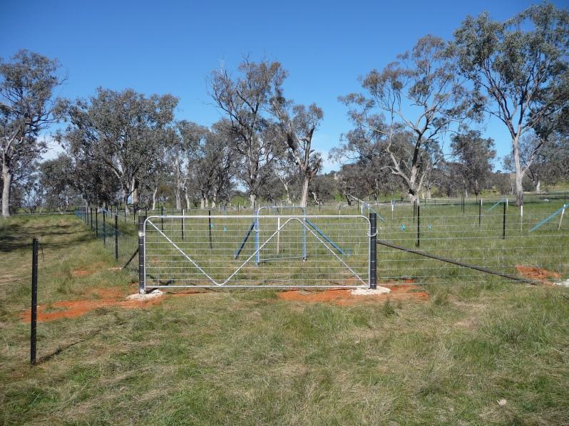 Woodland restoration plots