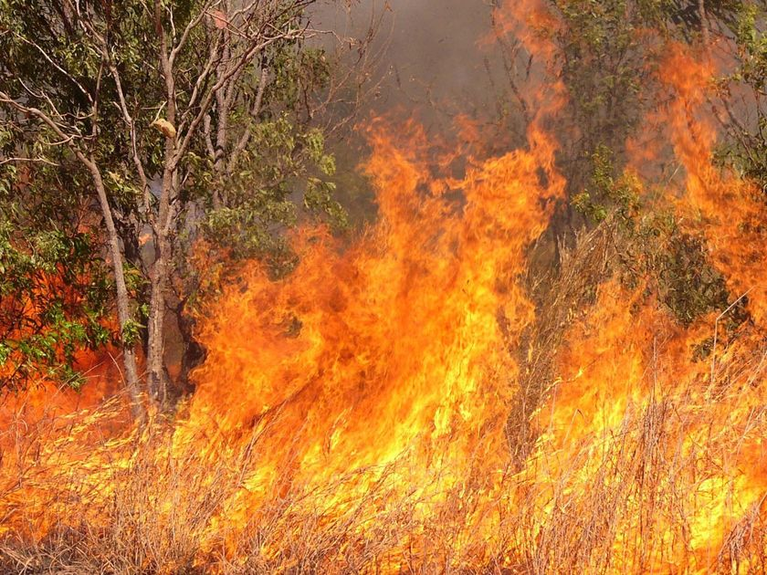 Fire and rain: what makes a woodland?