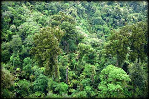 nz-conifer-broadleaf-forest