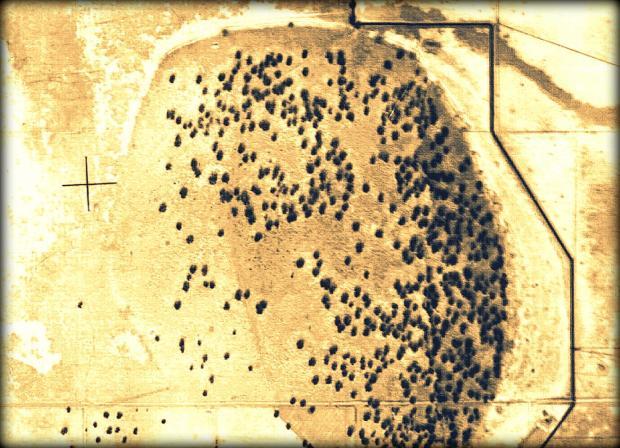 1945 wetland