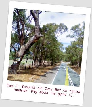 2 Street View Old Roadside Tree