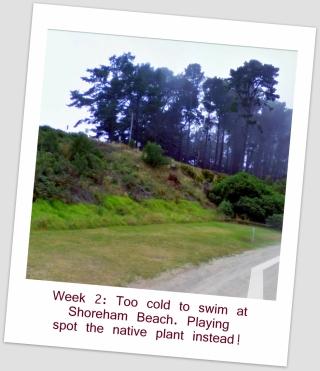 4 Street View Coastal Weeds