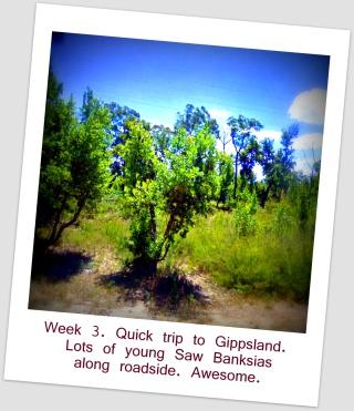 5 Street View Banksias