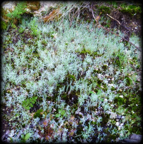 Mosses plants
