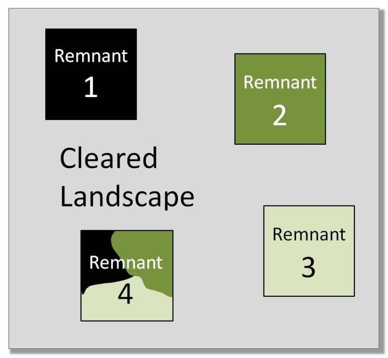 4 remnants landscape 3