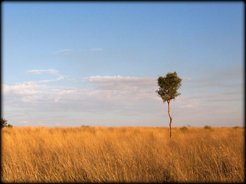 Kwok Simpson Desert 1
