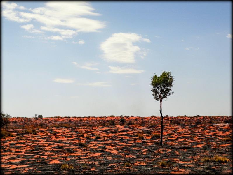 Kwok Simpson Desert 2