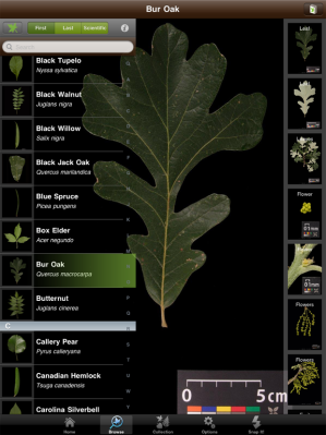 The Leafsnap app. Photo source: SmartPlanet