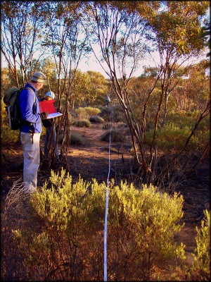 The team measured over 40,000 stems of mallee trees. Photo: XXX.