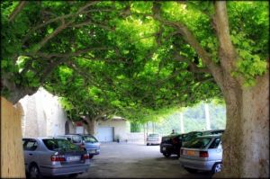 Can a leafy suburb improve human well-being? Car park in Séguret France. Source: Max Bourke.