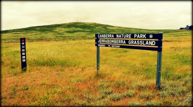 Canberra remnant grassland