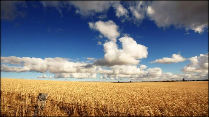 Growing wheat in the Mallee. Original photo from ABC News.
