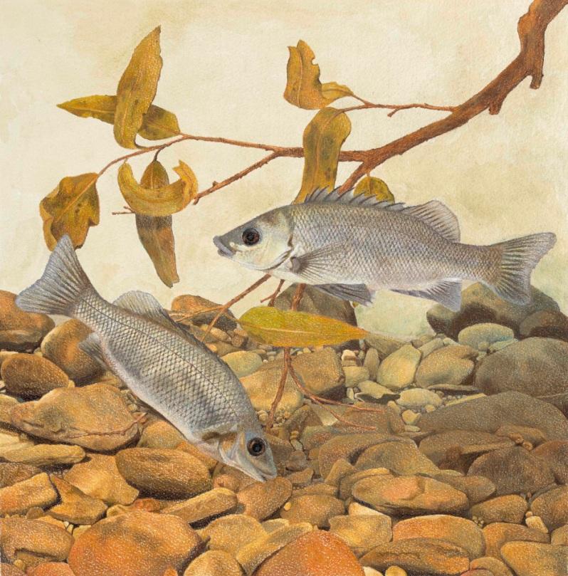 fish-finalno-border