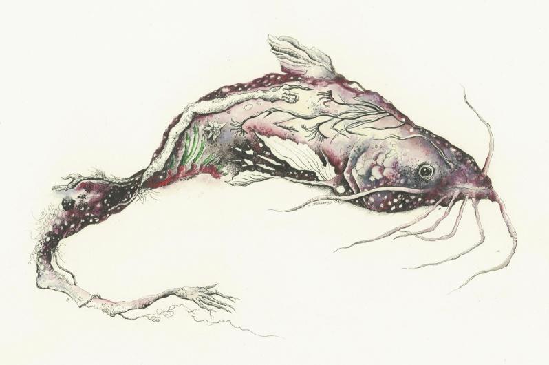 1-Catfish-kangaroo-pawfinal