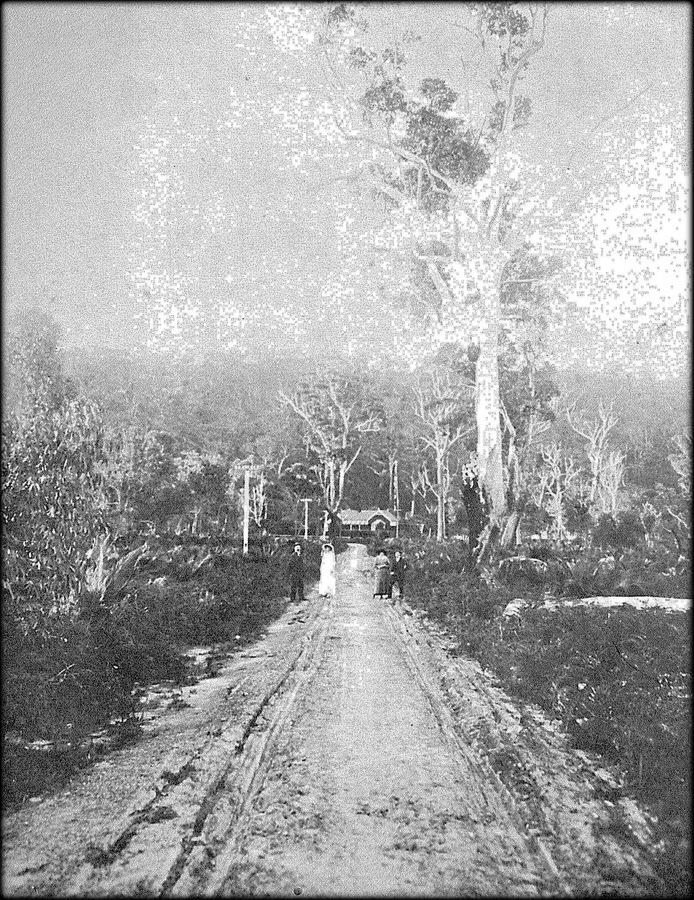 Memorial Avenue_1915