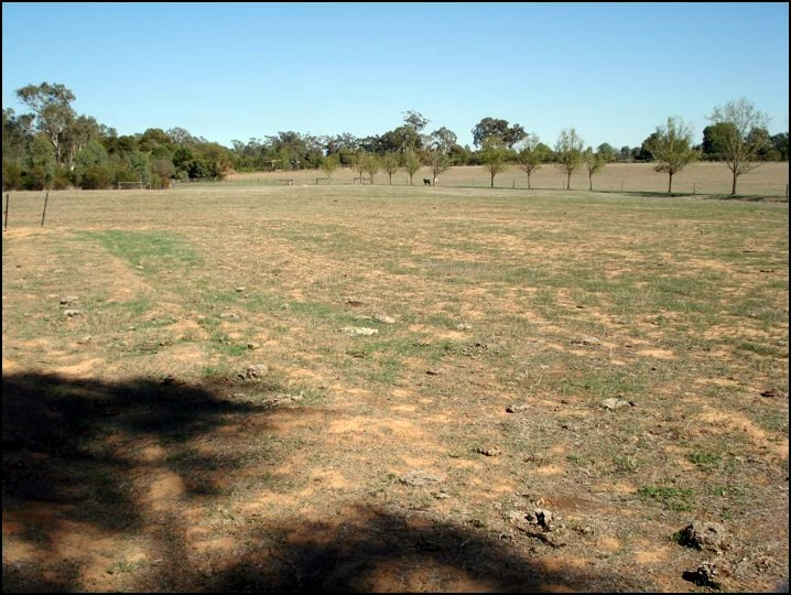 Murchison seed site 2008